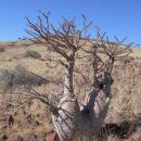 drevje