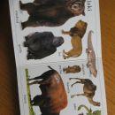 Moj prvi živalski besednjak, podarim ob nakupu drugih knjig