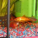 Moje ribice
