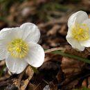 Pomlad 2005