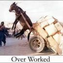 Poor donkey...