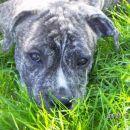 le kaj se skriva pod travo??!!