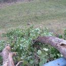 podrto drevo bližje
