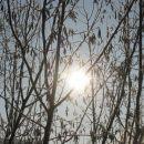 sonce sije čez veje gmovja