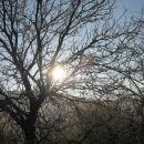 sonce sije čez veje
