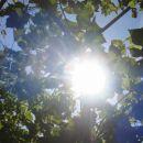 sonček sije čez listje