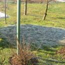 travica in slana na delu trave kjer je senca