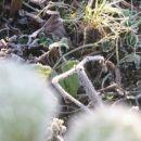 slana na travi pa listih