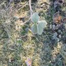 slana na travi pa listkih