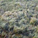 slana na travci