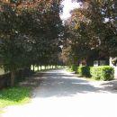drevored posajen leta 1980 v spomin na Tita