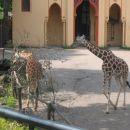 Iz živalskega vrta
