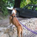 Tudi Leno zanima kakšen je Velenjski grad, ki se skriva za avtom :))