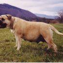 Naša najstarejša psička CHANC