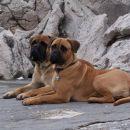 Celeja Connor Jr. & Celeja Foxy