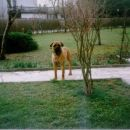 BASCO - 4.2.1998