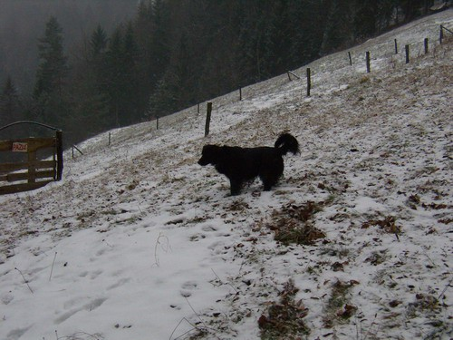 Zima zima bela - foto