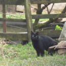 5. lokacija- mačkon, ki je imel bulo nad očesom