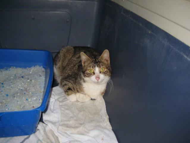 Odrasle mačke- obalni azil - foto