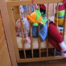 Spim, kot klada. 15.4.2007