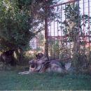 Medo i Rima, CACIB Gradiska, 2005.