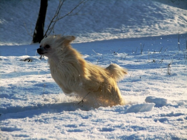 Winter Wonderland - foto