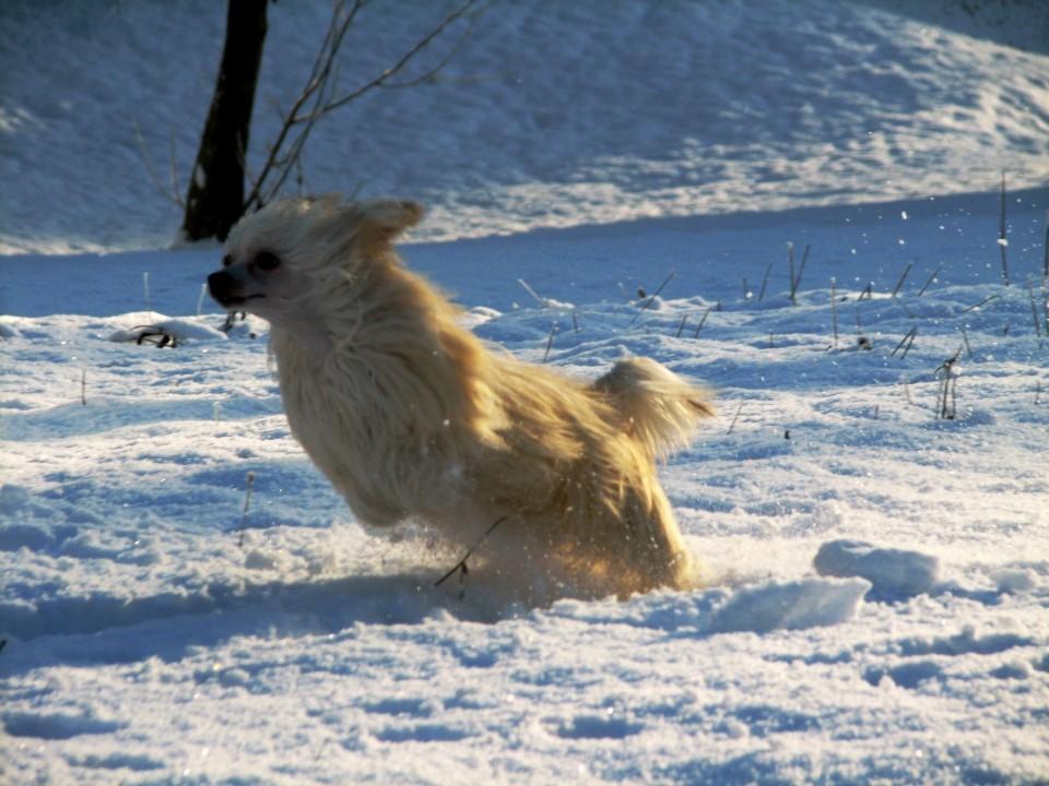 Winter Wonderland - foto povečava