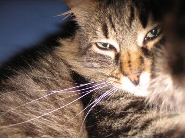 Mačkoni - foto