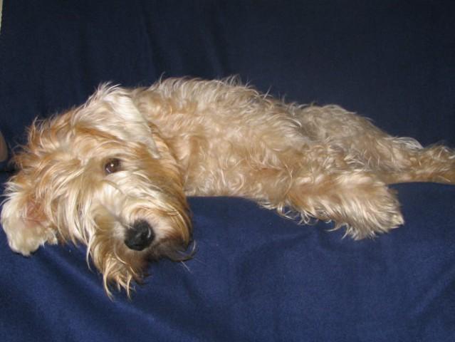 Počitek (januar 2006) - foto