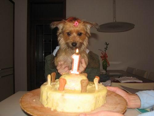 Rina na Chayinem 1. rojstnem dnevu=) - foto