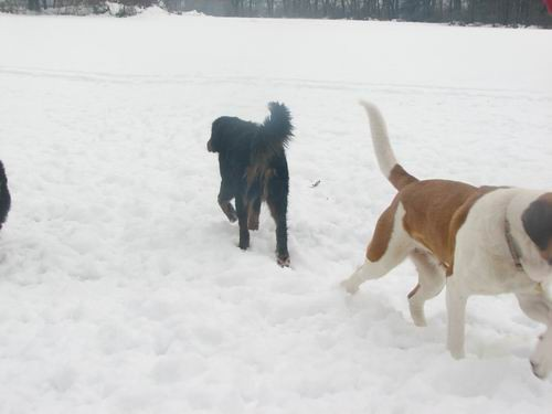 Zajčja dobrava,7.1.2006 - foto