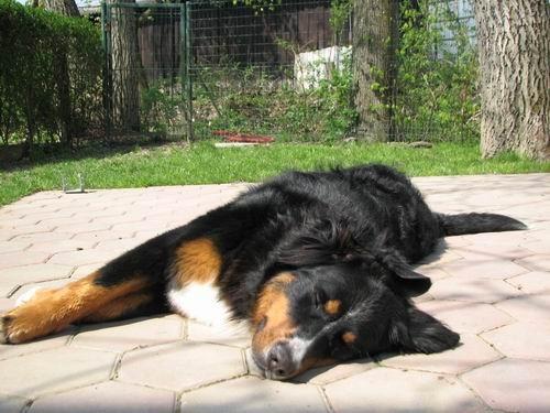 Rina in Dora,(in Rinino kopanje)23.4.2006 - foto