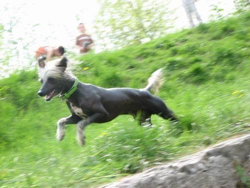 Rina in Gany-sprehod,26.4.2006 - foto povečava