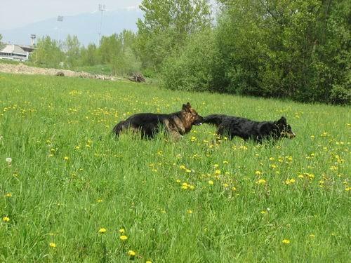 Rina,Fido in Chaya-sprehod,5.5.2006 - foto