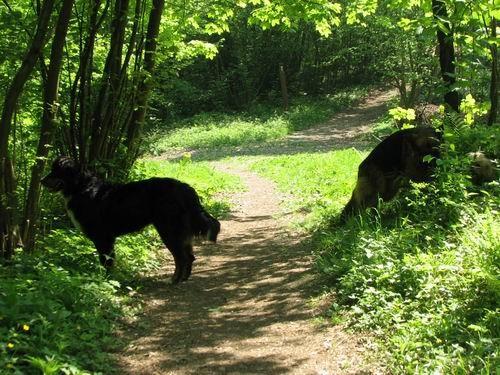 Rina,Fido in Chaya-sprehod,5.5.2006 - foto povečava