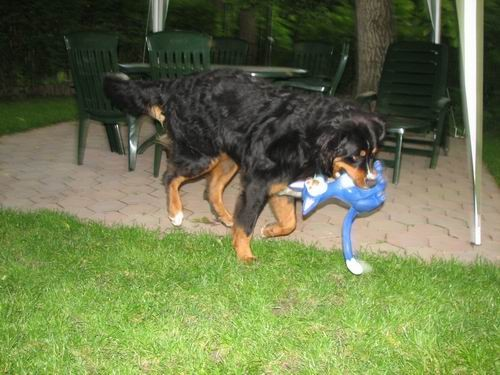Rinin 2.rojstni dan,7.6.2006 - foto