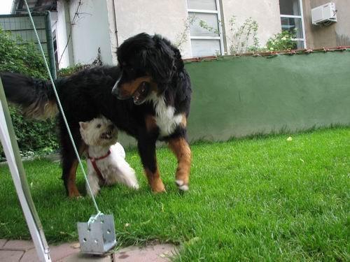 Rina in Timy,5.6.2006 - foto povečava