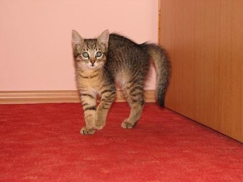 Mali tigerček - foto