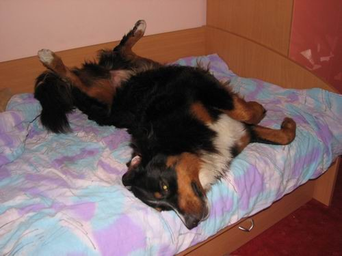 Rina,''mučenje'' na postelji :))) - foto