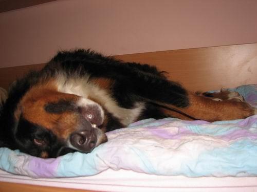 Rina,''mučenje'' na postelji :))) - foto povečava