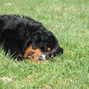 hehe,zgleda, kot da bi spala sredi travnika, ampak ne.Ona le uživa v grizlanju palice:))