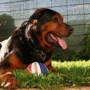 Rex z žogo