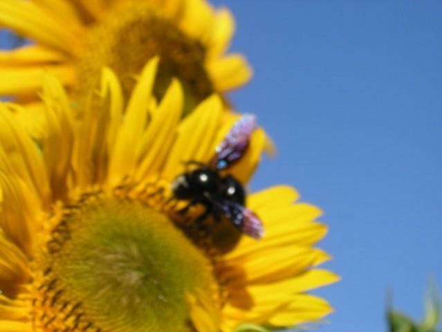 Digitalna fotografija - posnetki iz narave - foto