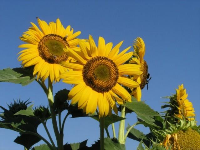 Meni najljubše rože - z maminega vrta!