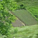 V vrtačah obdelana polja krompirja.