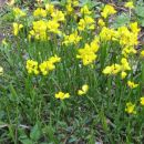 Več kot 800 različnih sort planinskega cvetja.