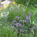 Povsod cvetje.