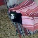 Kako to misliš, da sem jaz mačka in da je to pasja postelja?