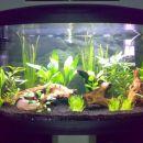 Pravkar postavljen akvarij (6.8.2007)