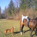 Konji in psi